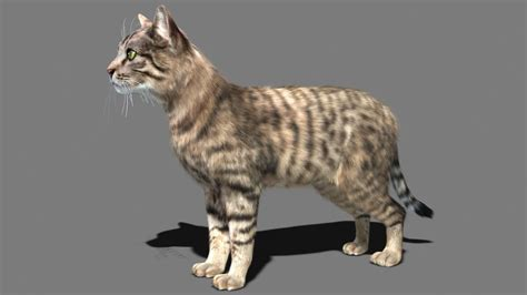 3d Cat cat 3d model animated rigged max cgtrader