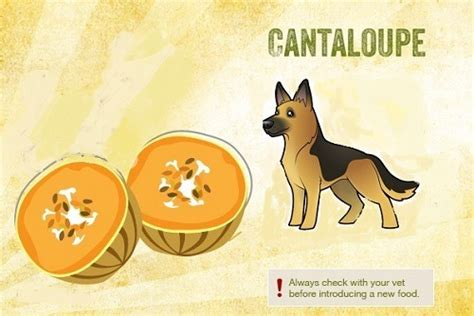 can my cantaloupe can my eat that safe and unsafe foods for your pooch