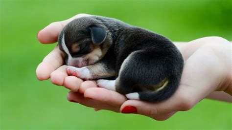 small wallpaper 50 cute dogs wallpapers dog puppy desktop wallpapers