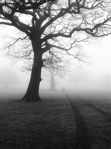 classes are canceled a branches book eerie elementary 7 books free photo trees mist fog eerie nature free image