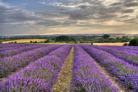 15 stunning photos of lavender fields around the world 171 twistedsifter