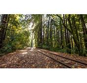 Railroad Rails Trees Forest Tracks Train Wallpaper