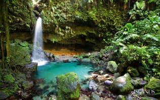 Climbing Plants In The Philippines - 5 tropical rain forest fun facts biomes biomes biomes