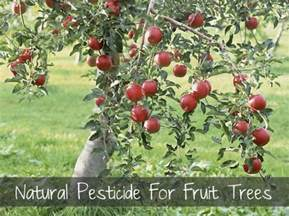 pesticides for fruit trees pesticide for fruit trees homestead survival