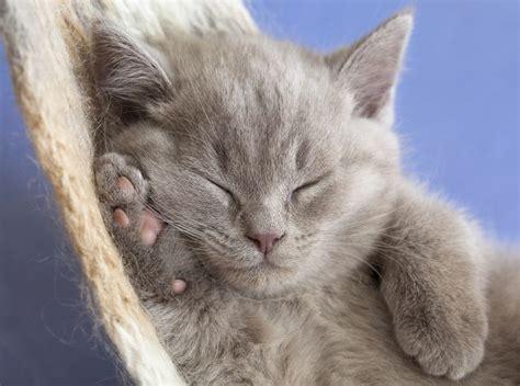 amaca gatto amaca per gatti come crearne una community lm
