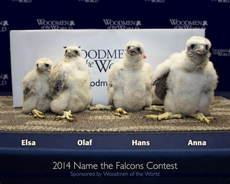 woodmen tower falcon chicks named after frozen