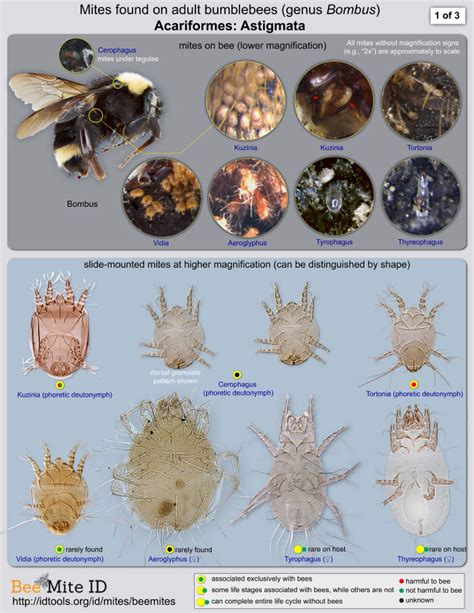 a guide to identifying your home d cor style new web based tool for fast identification of bee mites