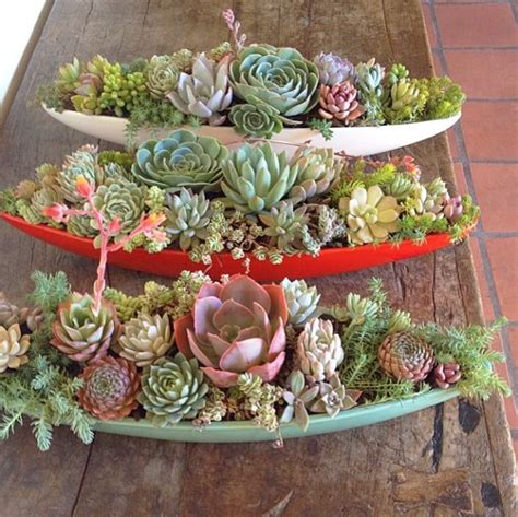 How To Propagate Succulents Sunset - best 25 succulent display ideas on succulents