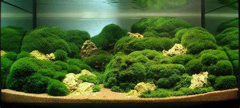 membuat karpet aquascape budidaya tanaman aquascape menjadi bisnis rumahan candrasp