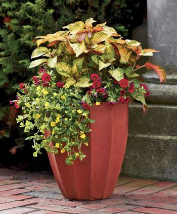 Planter Ideas Sun by Flowers Plants Container Gardening On