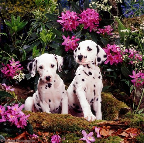 puppies and flowers puppies and flowers wallpapers wallpapersafari