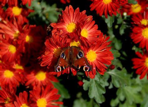 foto fiori piu belli mondo foto fiori piu belli mondo