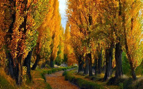 imagenes arboles otoño los 225 rboles oto 241 o las hojas ca 237 das camino fondos de
