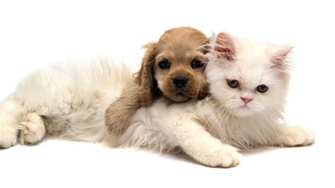 Adorable Pets by Puppy Cat Photo Wallpapers Backgrounds
