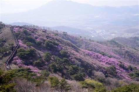 Karpet Gunung sajikan pemandangan indah haran bunga di gunung georyo ini disebut karpet alam