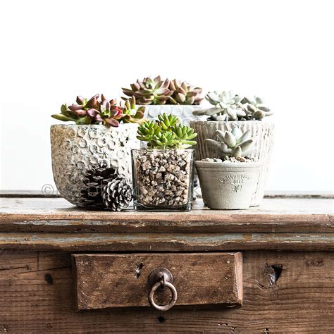 pots for succulents for sale pots for succulents for sale 28 images 646 best