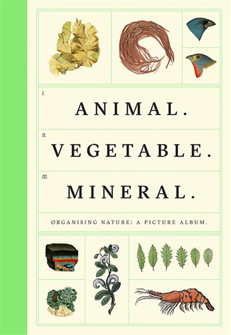 animal vegetable mineral organising nature a picture album tim dee nhbs book shop