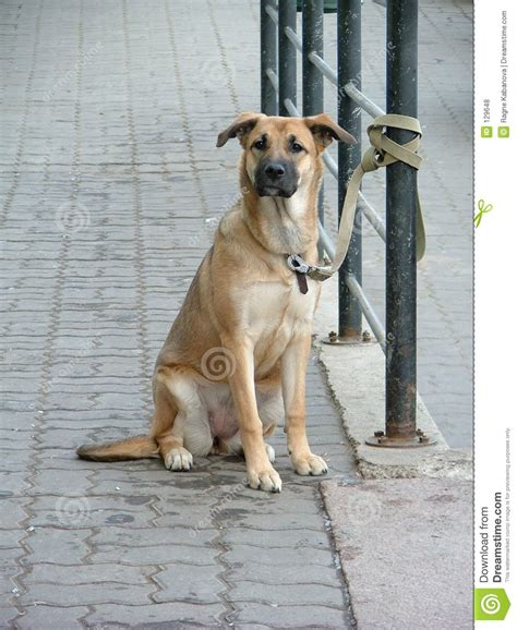 puppy waiting waiting royalty free stock photos image 129648