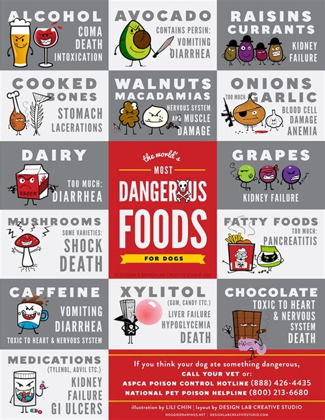 toxic foods for dogs true story my ate chocolate here s what happened