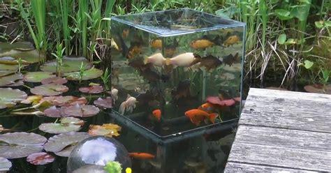 Lu Akuarium Diy cool diy project creates viewing tower for pond fish tankk