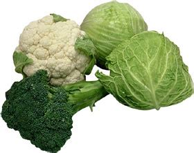 kale broccoli and cabbage replace traditional flowers as the cabbage family growcabbage nebraska extension in
