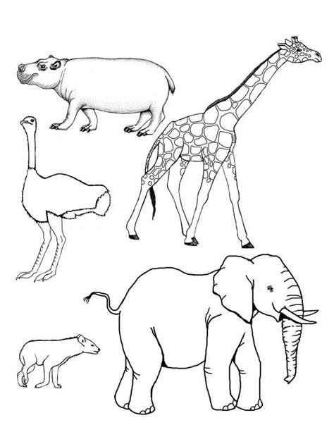 imagenes animales vertebrados para colorear animales mamiferos para colorear