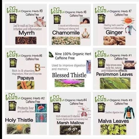 Instore Products Similar Gfc Detox by 10 Pack Iaso Detox Tea And 13 Similar Items