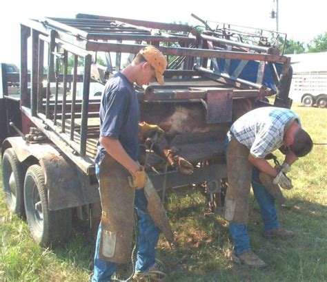 cattle hoof trimming table for sale cow hoof trimming www pixshark com images galleries