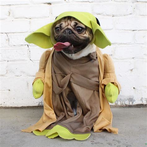 pug status doug the pug on quot yoda only one for me http t co vpp2oma8a4 quot
