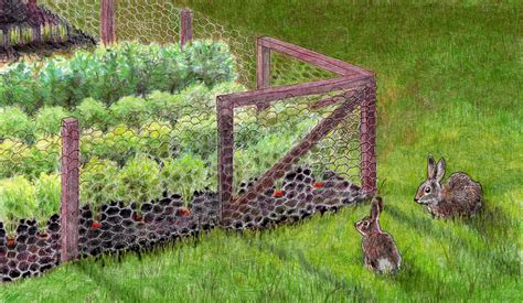 indoor garden for rabbits easy build diy rabbit wire fence fence ideas