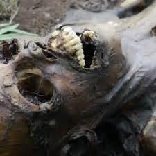 imagenes fuertes de cadaveres en descomposicion descomposici 243 n del cuerpo humano