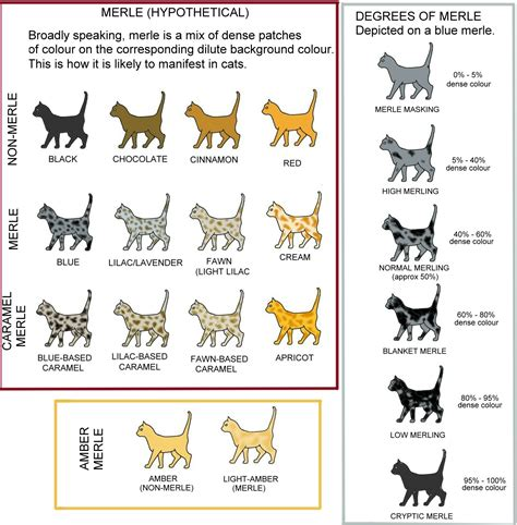 dog color pattern names guide to merle cat coat patterns and colors meow barkers