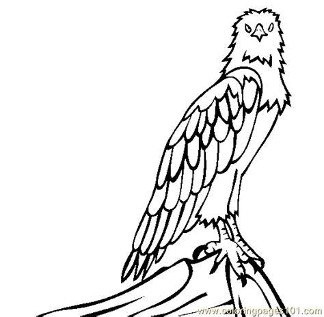 Sea Eagle Coloring Page   white bellied sea eagle coloring page free eagle