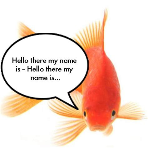 memory span 8tracks radio a goldfish has a memory span of three seconds 7 songs free and