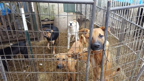 houston spca dogs justice for animals reportedly in animal rescue facility forcechange