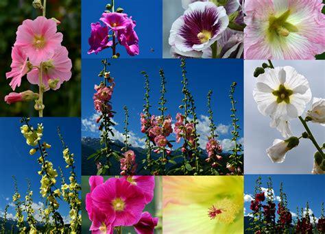 fiori d giardinaggio fiori d 180 estate