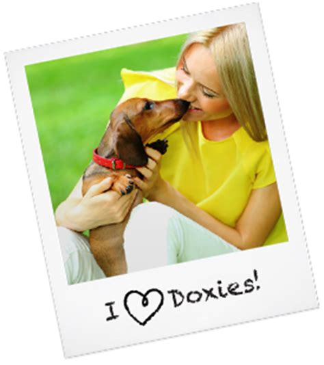 adoption baton adopt a dachshund baton dogs in our photo