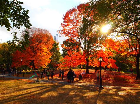 in fall best things to do in the fall with kids in new york city