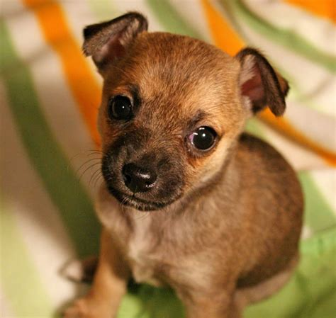 caring breeds easy care dogs breeds guide breeds picture