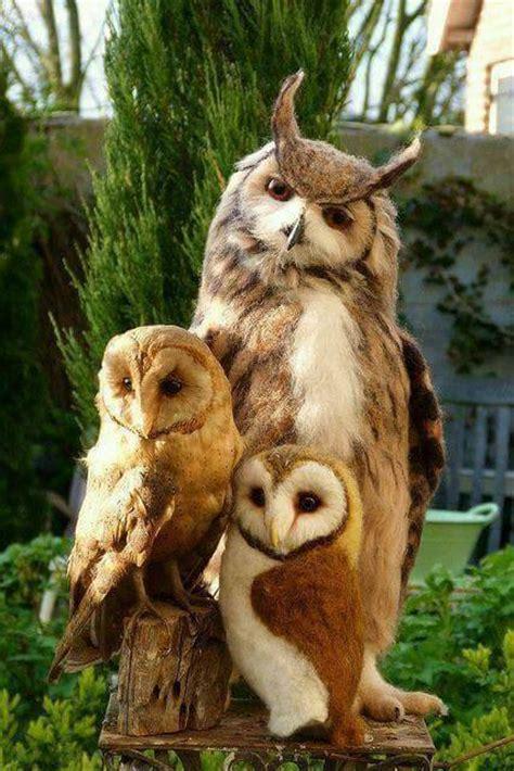 owl family gagsmedia
