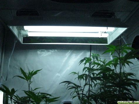 t5 fluorescent grow t5 fluorescent grow lights halogen light bulbs vs cfl