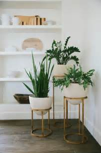 in door plant put in pot vide styling tip adding greenery with succulentsbecki owens