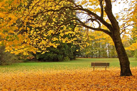 tree and bench autumn trileigh tucker