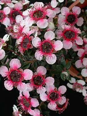 Pflanze Bestellen 655 by Botanical Garden Plovdiv Ltd Bulgaria