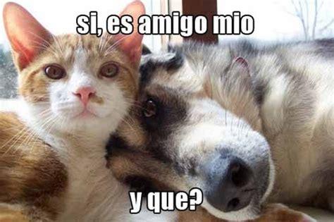 imágenes de animales para whatsapp imagenes chistosas de gatos con frases para descargar