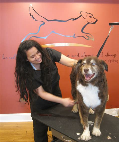 holiday house pet resort new grooming spa in doylestown