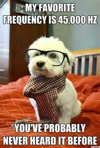 Blind Luck Horse 25 Funny Dog Memes