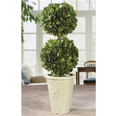 boxwood topiary preserved boxwood topiary 19 quot