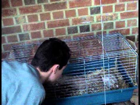 wann legen hühner das erste ei wann legen wachteln eier unser hobby selbstversorger