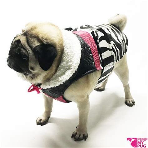 clothes with pugs on 17 best images about clothes for pugs on shops i and